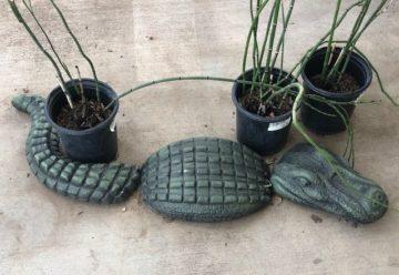 Concrete Crocodile