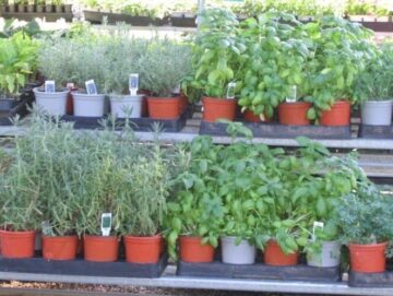 Herb & Vegetable Tables