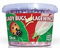 Orcon Lady Bugs and Lacewings