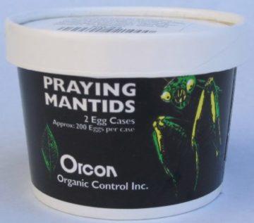 Orcon Praying Mantids