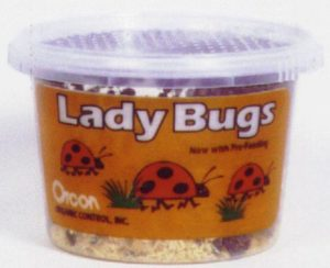 Orcon Lady Bugs