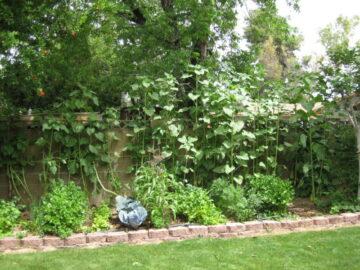 Victory Garden Ideas