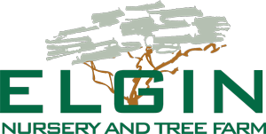 Elgin Nursery & Tree Farm: Phoenix, AZ