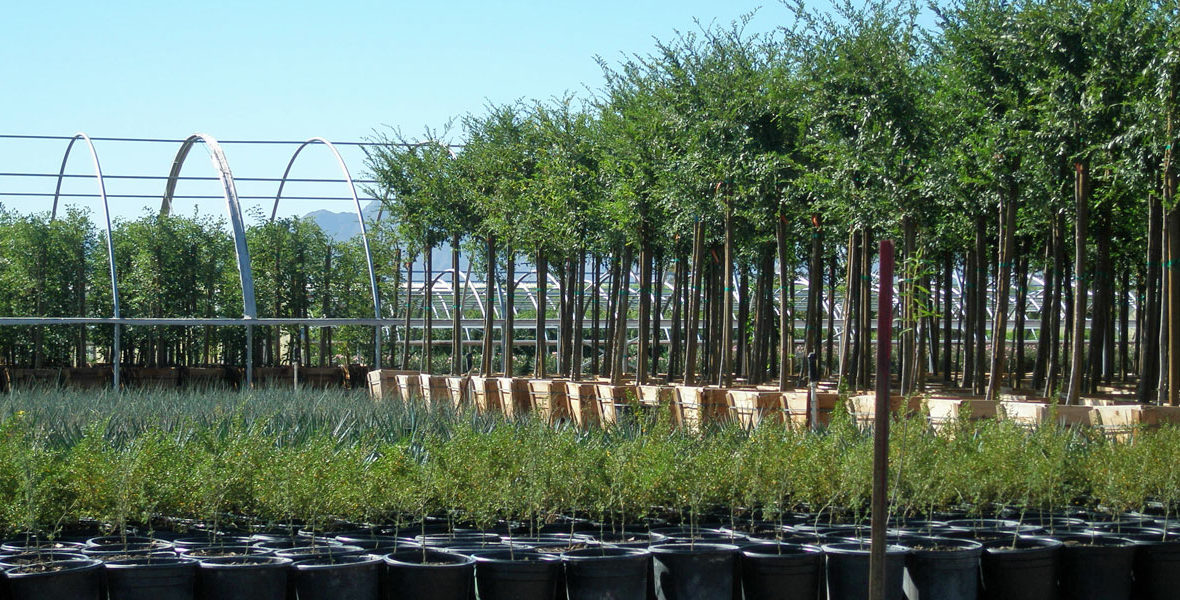Elgin Nursery & Tree Farm