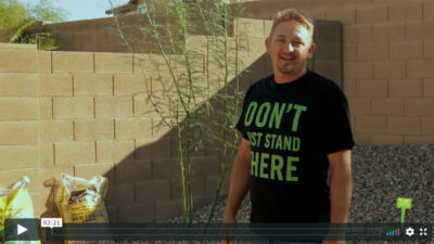 How To Plant a 15-Gallon Size Tree in Arizona