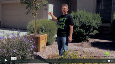 How To Plant a 24-Inch Box Size Tree in Arizona