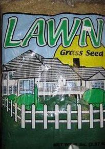 Perennial Rye Grass Seed